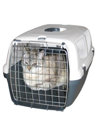 chat-cage-transport