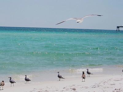 Les oiseaux ne s'attendaient pas à une marée noire