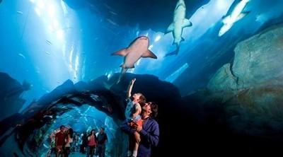 dubai-aquarium-and-underwater-zoo