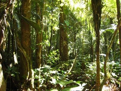 Forêt amazoniennes, Amérique du Sud