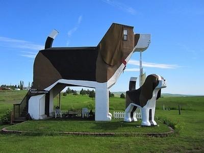 hôtel chien