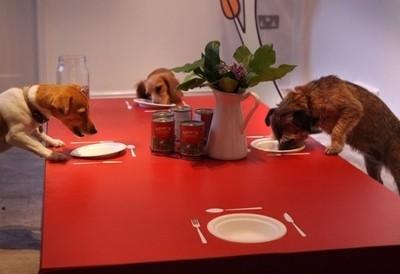 Restaurant chiens